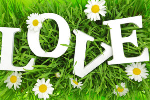Grass with flowers and white text Love on it